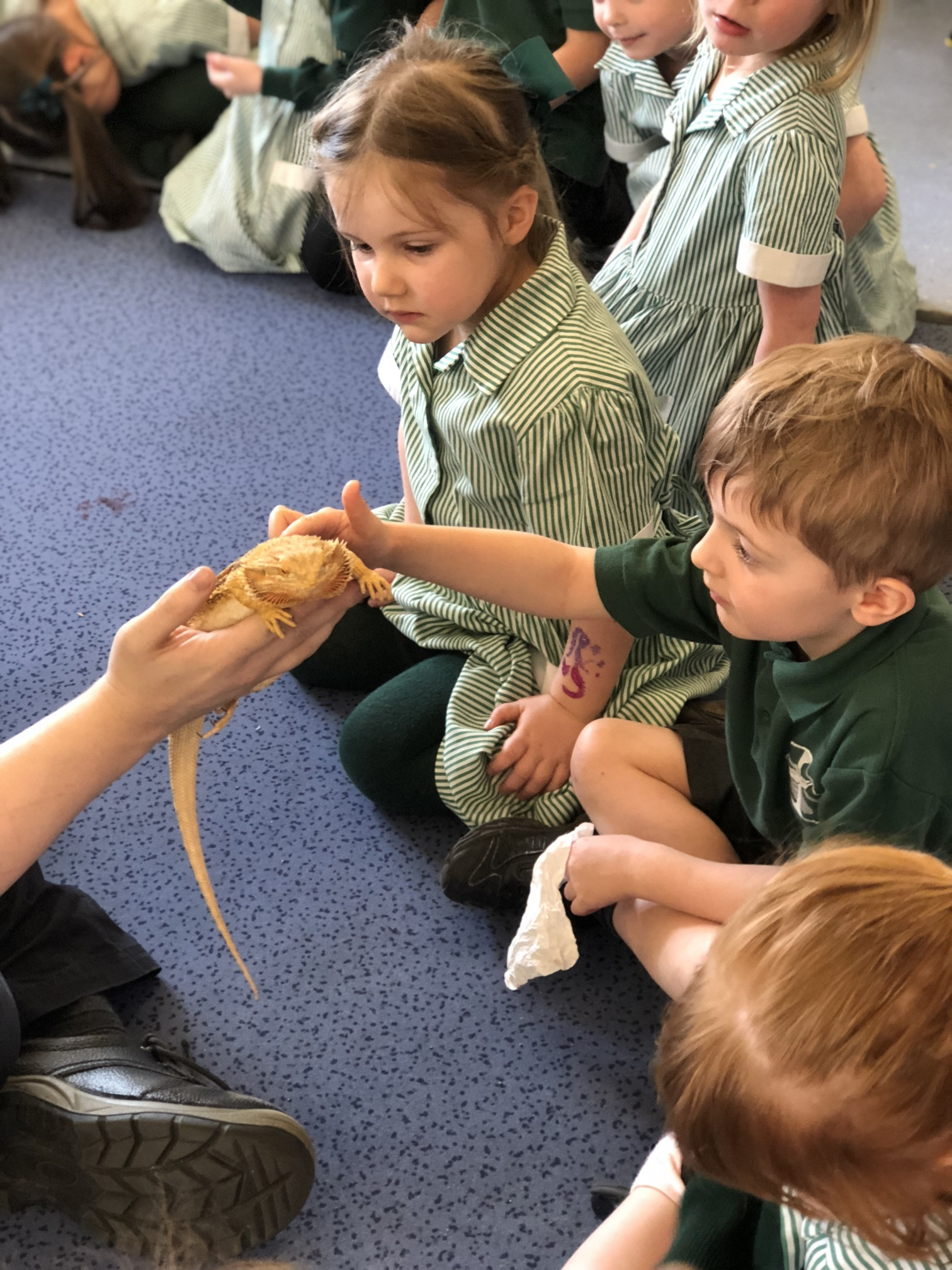 St Columba's Early Years Enjoy Visit from Zoolab